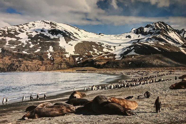 Seals and penquins on a beach in the Antarctic.